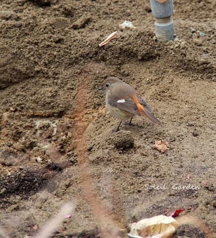 ◆可愛い鳥たち_e0154682_17211088.jpg