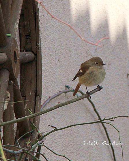 ◆可愛い鳥たち_e0154682_17214141.jpg