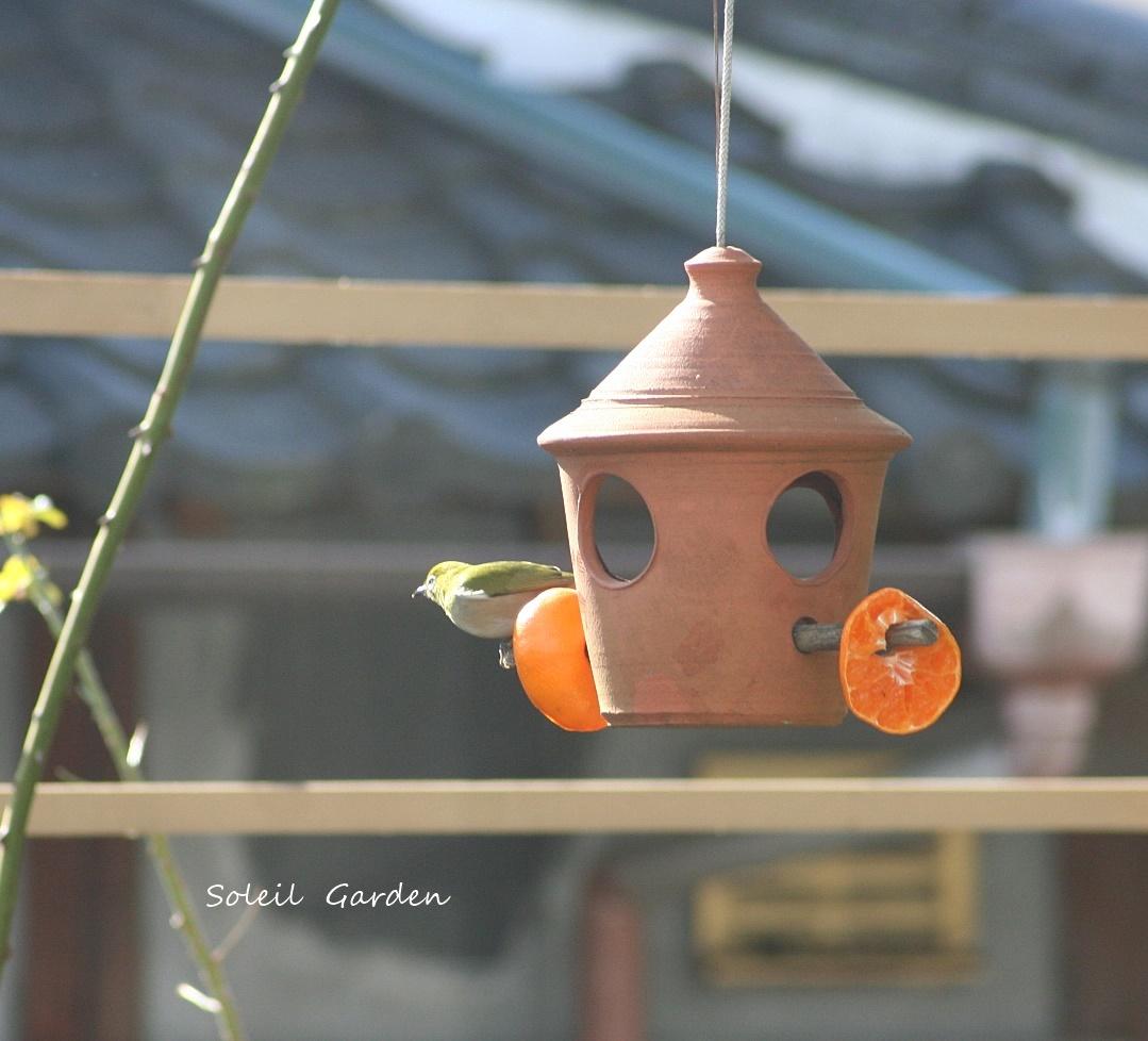 ◆可愛い鳥たち_e0154682_22293970.jpg