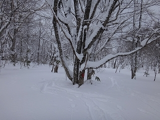 荘川の火山1379m新雪滑降_e0064783_20583093.jpg