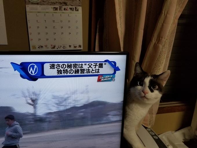 ご機嫌なちぃ太_c0369492_09273061.jpg