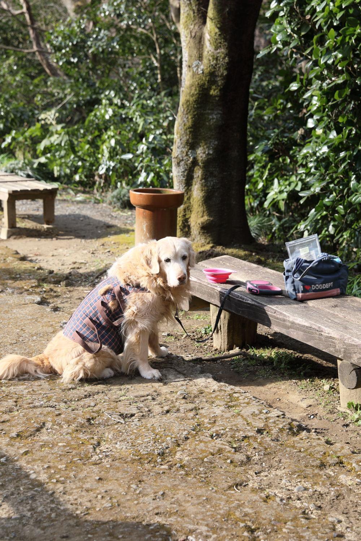 おいしいパン屋さんと池の公園♪_b0275998_20313495.jpg