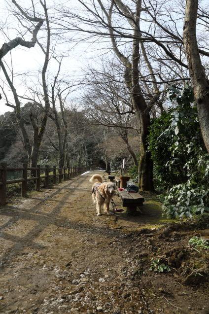 おいしいパン屋さんと池の公園♪_b0275998_20314100.jpg