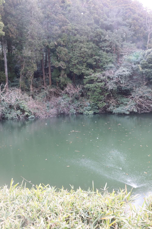 おいしいパン屋さんと池の公園♪_b0275998_20320469.jpg