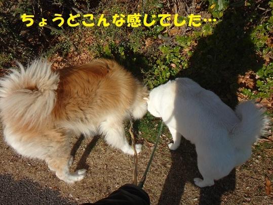 f0121712_08480361.jpg
