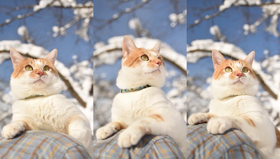 満開の雪_b0259218_00095111.jpg