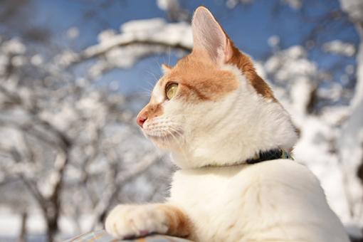 満開の雪_b0259218_00260967.jpg