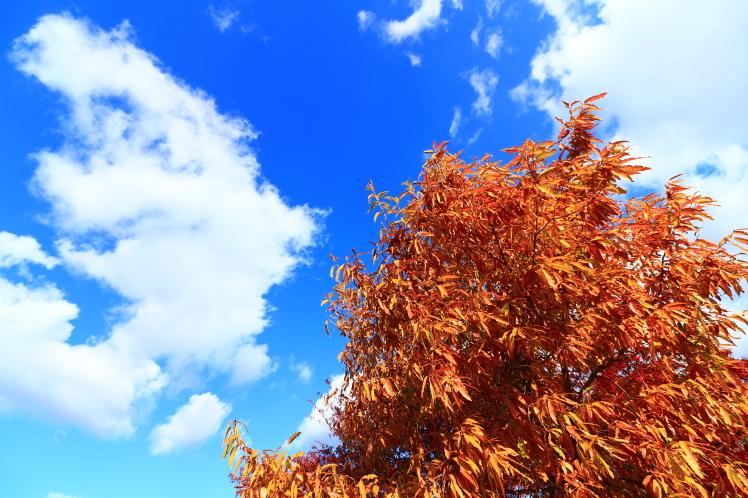 梅小路公園 京都観光_f0209122_18243266.jpg