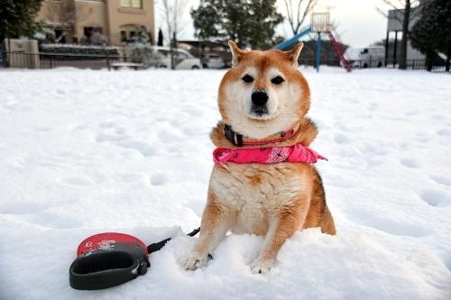 雪だるまと寒波と子供・・・相関関係_b0314043_07591904.jpg
