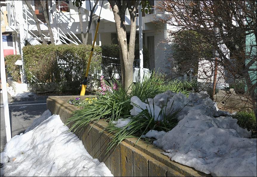 雪で転んでしまった母を思って_a0031363_01321512.jpg