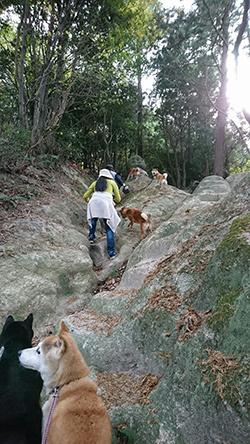 柴犬のお勉強 日本犬標準「一、本質と其の表現」②_b0057675_13350193.jpg