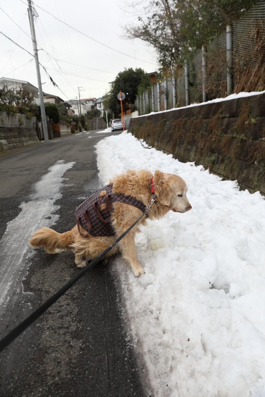 残っていた雪遊び♪_b0275998_13331037.jpg