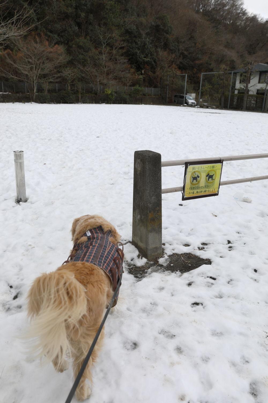 残っていた雪遊び♪_b0275998_13331300.jpg
