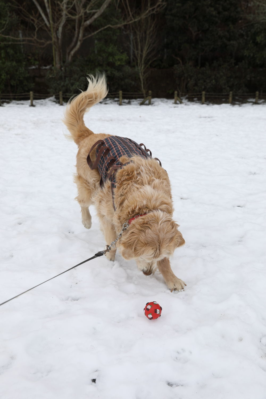 残っていた雪遊び♪_b0275998_13332963.jpg