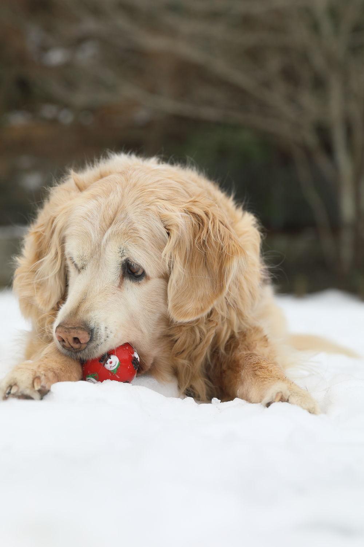 残っていた雪遊び♪_b0275998_13335454.jpg