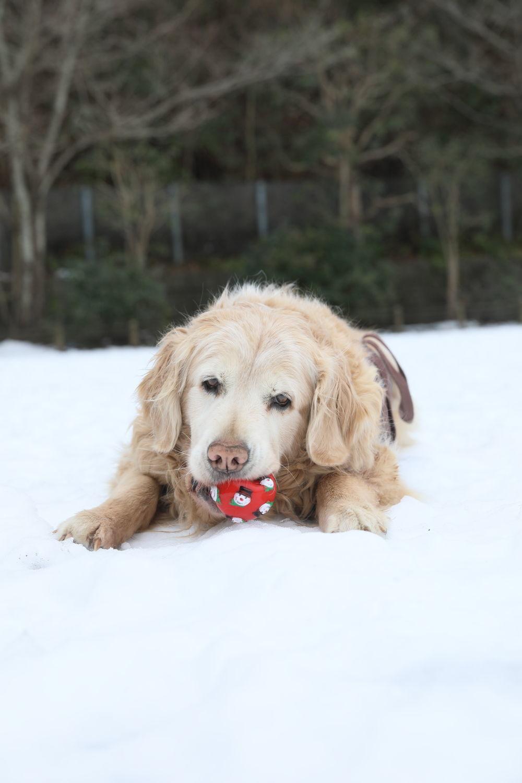 残っていた雪遊び♪_b0275998_13335882.jpg