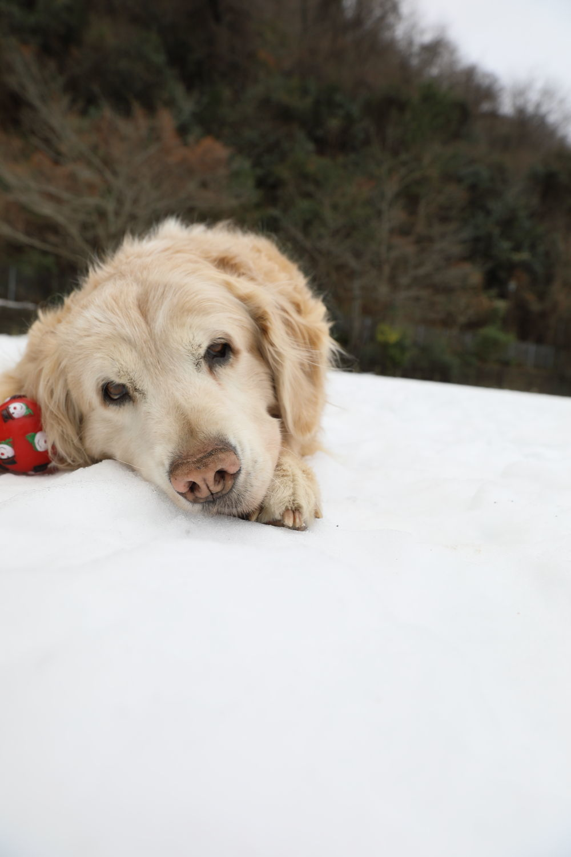 残っていた雪遊び♪_b0275998_13340072.jpg