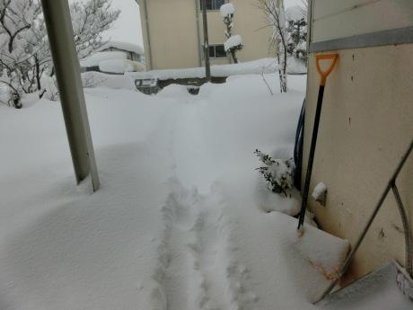 さらに雪-ヤケクソ、または火事場のばか力で_a0203003_10144491.jpg