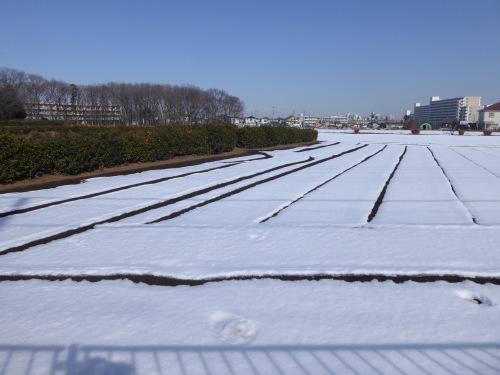 雪の下は人参でした_a0050728_15045481.jpeg
