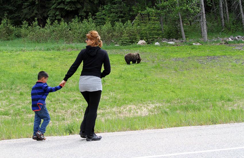カナディアンロッキーに生息するクマを知ろう!_d0112928_08572575.jpg
