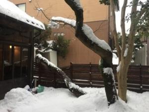 毎日、雪・雪・雪…_f0233340_14193987.jpg