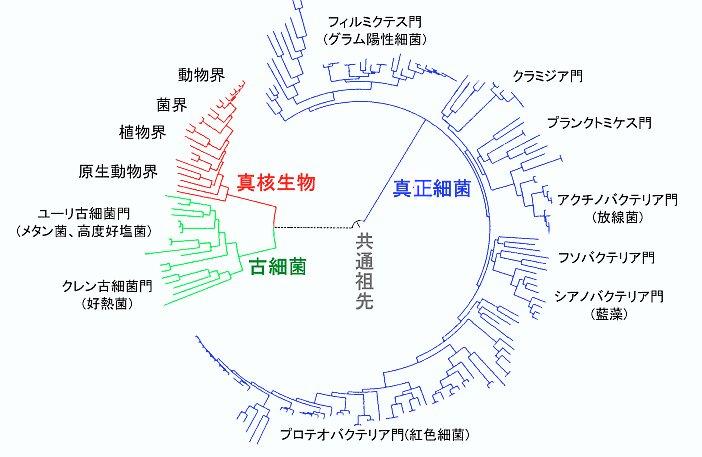 最新化学(ヘアケア)の本当の所・・・_b0210688_15072953.jpg