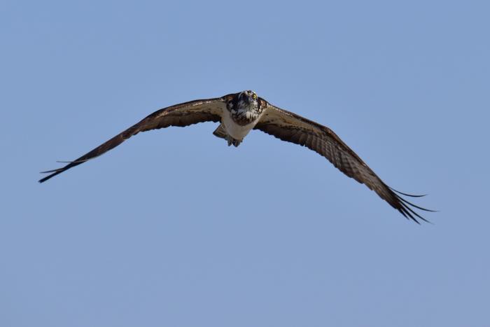 はなちゃん百面相と冬の野鳥たち(^o^)_c0049299_21301515.jpg