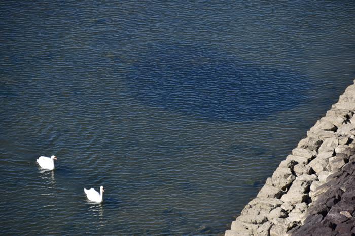 はなちゃん百面相と冬の野鳥たち(^o^)_c0049299_21413547.jpg