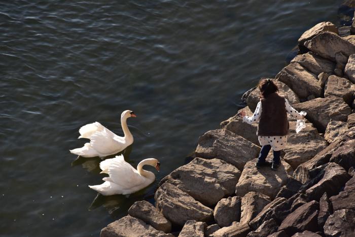 はなちゃん百面相と冬の野鳥たち(^o^)_c0049299_21551338.jpg