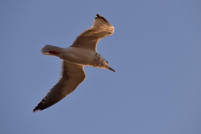 はなちゃん百面相と冬の野鳥たち(^o^)_c0049299_22034480.jpg