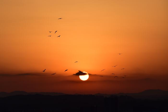 はなちゃん百面相と冬の野鳥たち(^o^)_c0049299_22044561.jpg