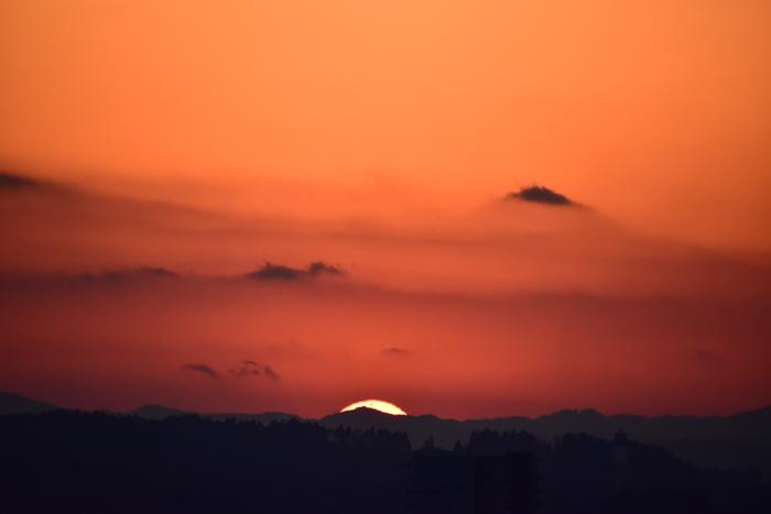 はなちゃん百面相と冬の野鳥たち(^o^)_c0049299_22110764.jpg