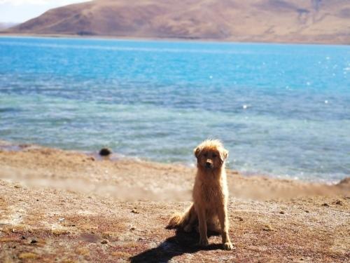 チベットへの旅_f0083294_14162270.jpg
