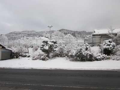 久々にまとまった雪が降りました。_c0194003_09160666.jpg