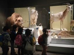 国立科学博物館 in 上野_f0153418_09391410.jpg