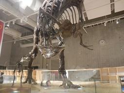 国立科学博物館 in 上野_f0153418_09435127.jpg