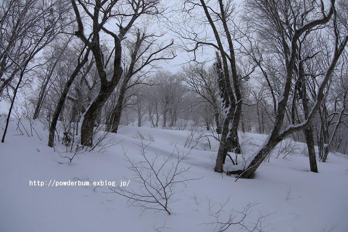 b0062024_20121532.jpg