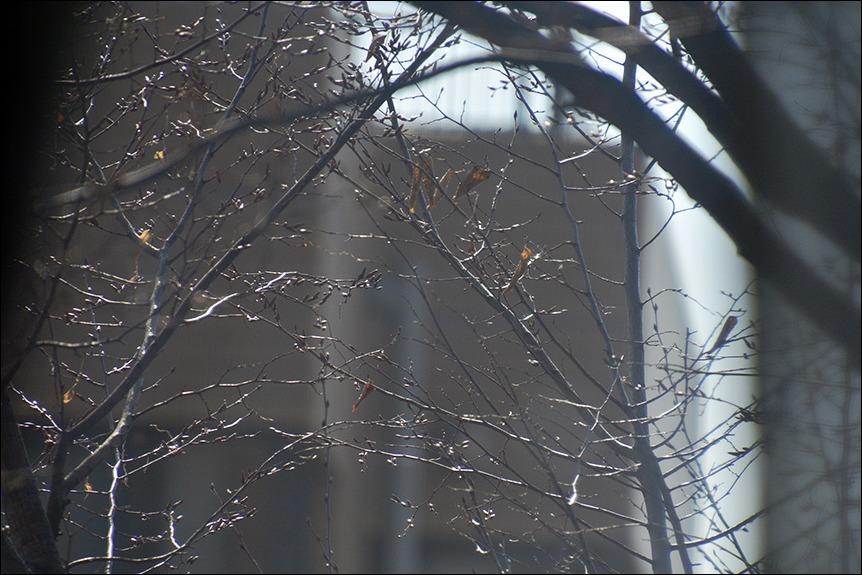 厳寒に完全リーファー温度管理で<冬のシャブリ>が着きました。_a0031363_23440474.jpg