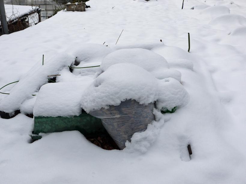 自宅前の雪かき15分で終了したが畑の野菜にまた試練2・2_c0014967_21033971.jpg