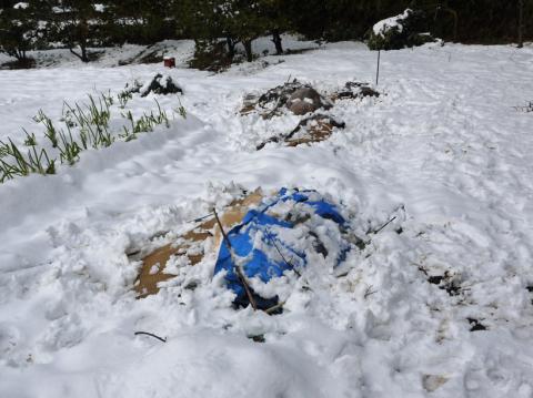 自宅前の雪かき15分で終了したが畑の野菜にまた試練2・2_c0014967_21050907.jpg