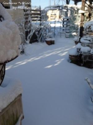 at Garden with White._e0365614_16524813.jpg