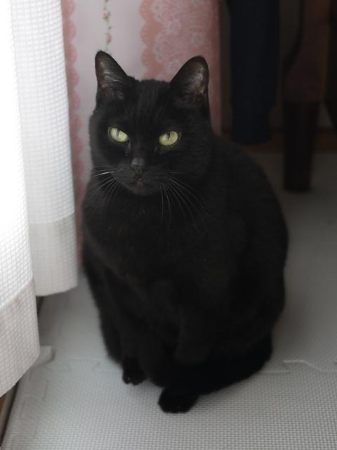 猫のお留守番 カーンちゃん編。_a0143140_23432784.jpg