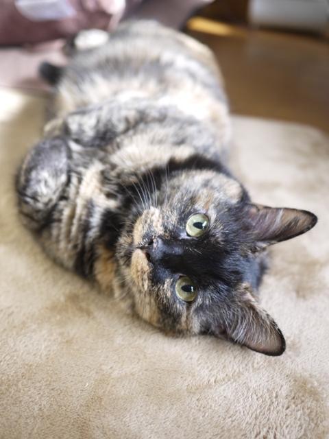 猫のお留守番 イナちゃん編。_a0143140_23452015.jpg