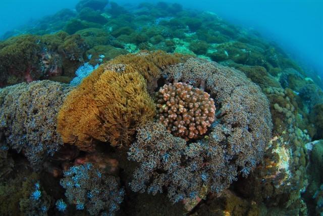 サンゴ調査も終わったし、そろそろ魚をじっくりと・・_a0138196_23234382.jpg