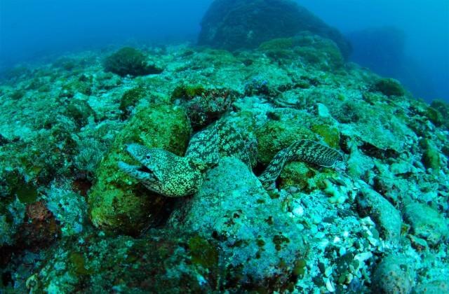 サンゴ調査も終わったし、そろそろ魚をじっくりと・・_a0138196_23483227.jpg