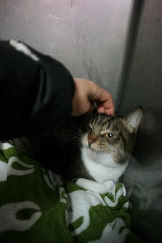 【猫・移動先募集】センター(支所)収容(2/3訪問)_f0242002_22400036.jpg