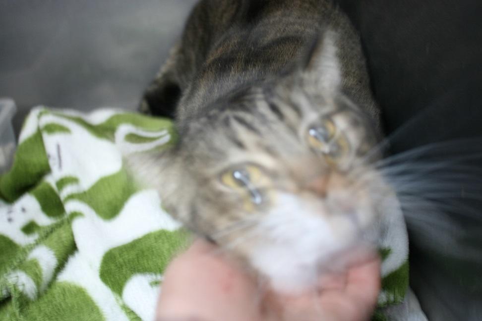 【猫・移動先募集】センター(支所)収容(2/3訪問)_f0242002_22401403.jpg