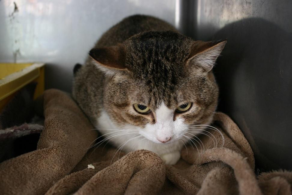【猫・移動先募集】センター(支所)収容(2/3訪問)_f0242002_22502748.jpg