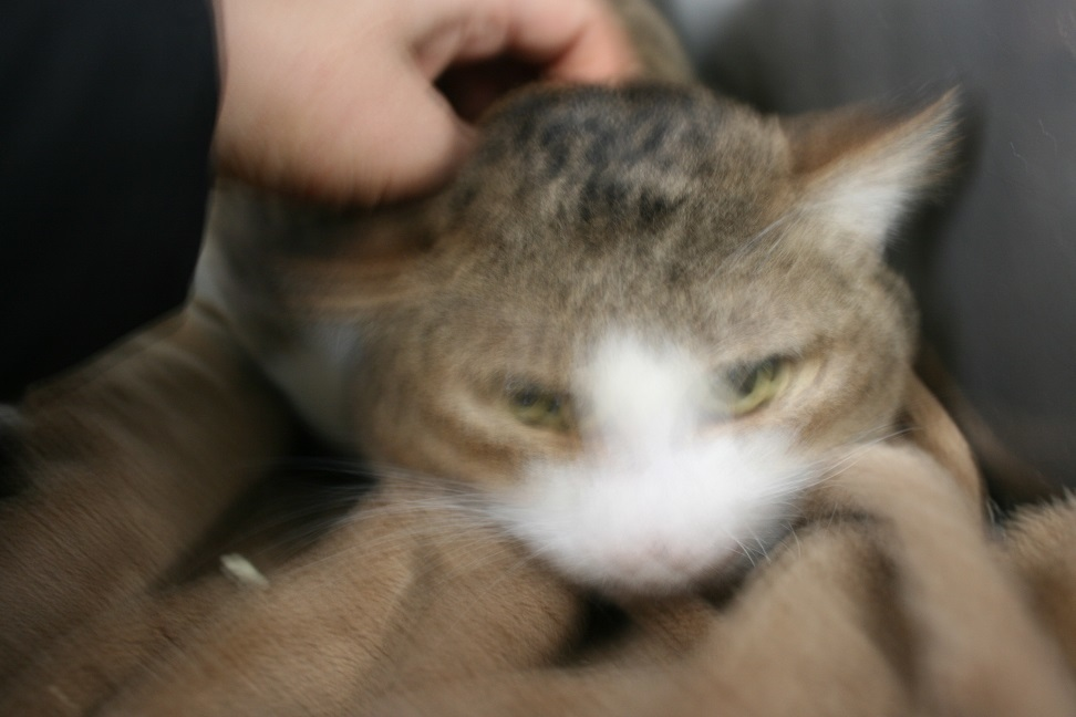 【猫・移動先募集】センター(支所)収容(2/3訪問)_f0242002_22504062.jpg