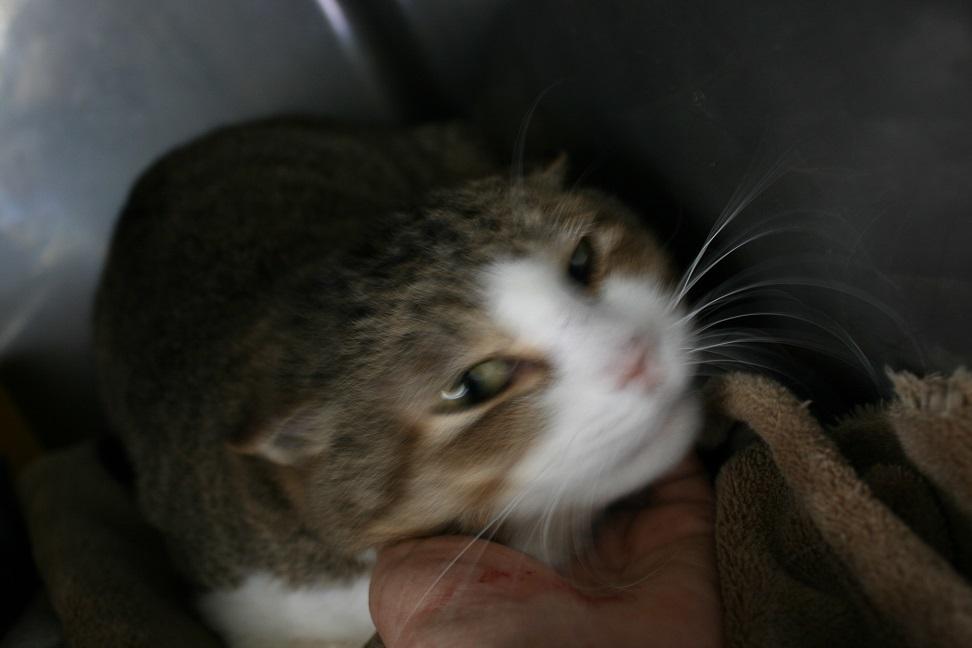 【猫・移動先募集】センター(支所)収容(2/3訪問)_f0242002_22504847.jpg